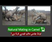 Animal Solution Pakistan