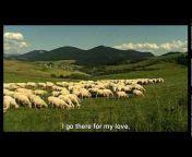 pastierskyfilm
